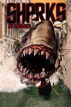 Sharks in Venice.................