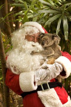Even Santa needs koala hugs. Why not! Great Australian Christmas photo.