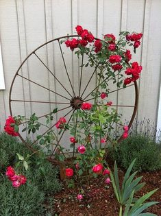Beautiful Wagon Wheel as Trellis. Paint it white against our red brick would be pretty. Then some colorful roses!