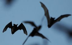 St. Francis Episcopal School cancelled Monday classes due to a reported bat infestation.