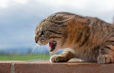 Geschlechtsreife Kater verändern ihr Verhalten und beginnen zu streunen; noch wichtiger sie markieren das Revier. Animals, Animal Clinic, Pictures, Animales, Animaux, Animal, Animais