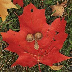 Happy Fall ! by Andre Villeneuve, via 500px