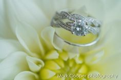 Bling, Wedding Rings, Engagement Rings, Photography, Jewelry, Fashion, Enagement Rings, Moda, Jewel