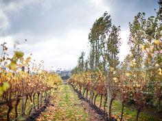 The success of Tasmania's wines | Australian Wine Companion