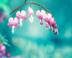 Spring Photography  floral wall art aqua flower by CarolynCochrane, $30.00