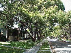 About 'Torrance,_California' Torrance California, Street Trees, Yahoo Images, Image Search, Sidewalk, Side Walkway, Walkway, Walkways, Pavement