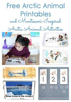 Lots of free Arctic animal printables along with ideas for preparing Montessori-inspired Arctic animal activities using free printables.