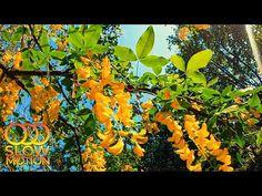 Пробуждающаяся весенняя природа Цветущие растения Пение птиц для релаксации и отдыха (Slow Motion) - YouTube Relaxing Room, Relaxation Room, Youtube, Painting, Art, Paint, Draw