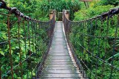 "Wall Art Poster Rope Bridge Jungle - XXL Mural Jungle Bridge 55x39.4"" Gift Idea #GreatArt Vacation Destinations, Dream Vacations, Vacation Spots, Romantic Vacations, Italy Vacation, Romantic Travel, Camping Desserts, Punta Cana, Nature Adventure"