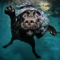 Check out this funny dog in the swimming pool photo series!