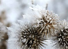 """Photo by Lovena West. Uploaded from FB page """"Just lookin around"""" Cold Fusion, Winter Scenery, Fb Page, Plants, Plant, Planets"""