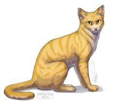 Warriors Cats - Goldenflower by Cat-Patrisiya on DeviantArt