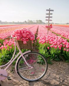 Bel Après Midi, Tulip Season, Pink Themes, Spring Nature, Tulips Flowers, Spring Is Here, Pink Aesthetic, Cozy House, Geography