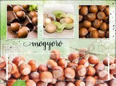 Mogyoró termesztése, metszése - gazigazito.hu Garden Plants, Beans, Vegetables, Gardening, House, Home, Lawn And Garden, Vegetable Recipes, Homes