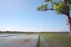 landscape @ploso,jawa timur