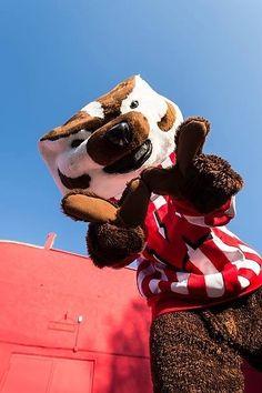 Bucky! Wisconsin Badgers #Badgers #OnWisconsin #UW [Follow WisconsinHouses for more local pins]