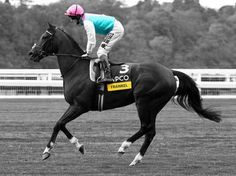 On this day in 2010, a legend was to emerge for the first time - FRANKEL. The QIPCO British Champions Series star made his debut at Newmarket on Friday 13 August, 2010, where he battled tenaciously to see off the challenge of another Series star, Nathaniel, by half a length. Will we ever see the like of him again?