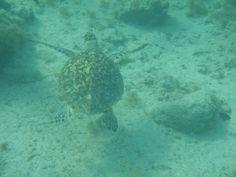 A close encounter of the third kind at lovely Boca Catalina, Aruba