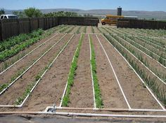 Designing a Basic PVC Home Garden Drip Irrigation System - very good PDF on layout, hole size & spacing, etc. Drip Irrigation System, Drip System, Hydroponics System, Aquaponics, Farm Gardens, Outdoor Gardens, Garden Watering System, Low Maintenance Garden Design, Gardens