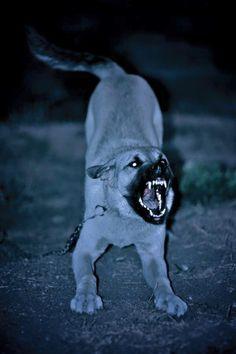 roar-like-a-kangal