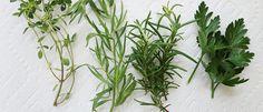 Como preparar suas ervas desidratadas - Lucilia Diniz