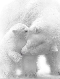 .polar bear love