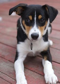 Smooth Coated Border Collie -- basically a puppy version of Stella :)