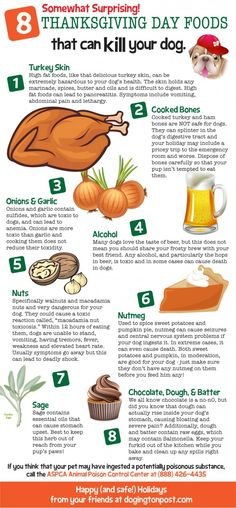 Foods That Can Be Dangerous For Dogs At Thanksgiving