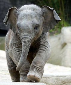 OMG I think my babies were the only thing cuter than this chubby baby elephant.