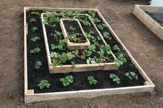 tiered raised bed for strawberries.  Would be lovely for herbs, or greens too