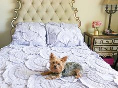 Lifestyle blogger Candace Rose Anderson dog Yorkie Francesca lays on the Anthropologie rivulets quilt in lavender.