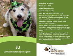 Today's l'il leprechaun rescue is Eli!  #jackrussell #rescue #sponsor