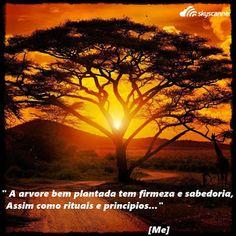 O Mundo Invisível de uma Mulher: The well-planted tree has firmness and wisdom