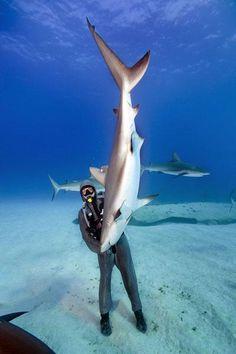 Durmiendo tiburones