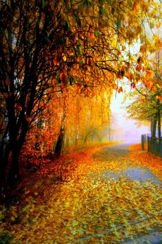 Lovely Autumn Colors drape a Quiet and a Relaxed Community road way. Beautiful World, Beautiful Places, Beautiful Pictures, Autumn Scenes, Autumn Cozy, Fall Pictures, Fall Pics, Seasons Of The Year, All Nature