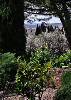A view from the Mate winery near Montalcino...it's just gorgeous!