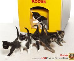 Kodak Unveils Live Kitten Printing Technology #aprilfools