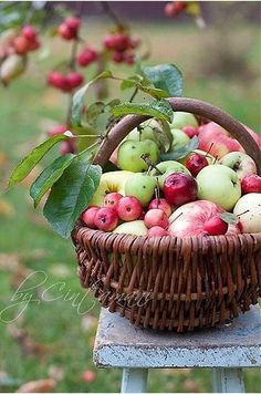 fresh from the apple orchard..