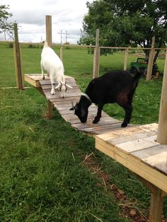 I need to build this for my goats. Keeping Goats, Raising Goats, Mini Goats, Baby Goats, Goat Playground, Playground Ideas, Goat Shelter, Goat Pen, Billy Goats Gruff