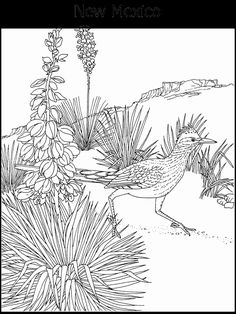 Free Printable Coloring PageNew Mexico State Bird And Flower Roadrunner Yucca Educational Printables