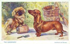 Dachshund and Pekingese - Vintage Linen Postcard