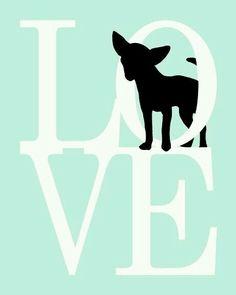 Chihuahua♥Love