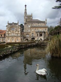 Bussaco: One of my favourite spots in Portugal (and many years since I have been there)