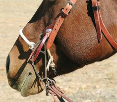 "Description: -Noseband-firm 3/8"" nylon, lays correctly from the first ride. -Headstall-single ply 3/4"" tight-fibered harness leather with a 5/8"" throat latch. -Slot Conchos-the safest most secure headstall concho I make.        see guidelines at left for slot concho removal and application. -Buckles-stainless steel with the leather below the buckles stitched to keep them in place.  How it works: -Designed for use on the adult horse: this is a great tool when you want to get out of the…"