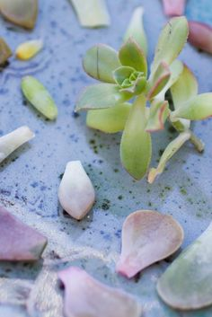 Tips for succulent propagation