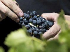 Vinos Spanish Wine, Organic, Fruit, Sweet, Food, Wine, Candy, Essen, Meals