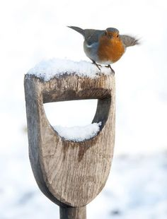 Little Robin Redbreast Little Birds, Love Birds, Beautiful Birds, Red Robin, Robin Bird, I Love Winter, Winter Time, European Robin, Robin Redbreast