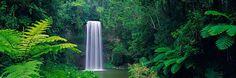 Millaa Millaa Falls by Peter Lik