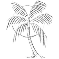 How to Draw Palm Trees in Front of the Sun Drawing Lesson