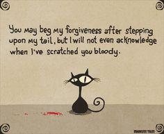 Cat Forgiveness